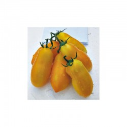 Semi di pomodoro San Marzano giallo solania