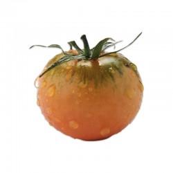 Semi di pomodoro tipo camone verduro