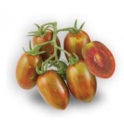 Semi di pomodoro datterino nero crispino Plum