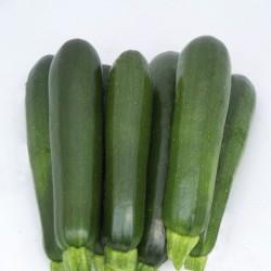 Semi Zucchino Scuro Gufo