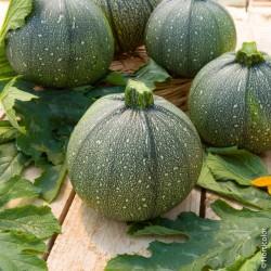 Semi Zucchino Tondo di Nizza