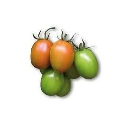 Semi di pomodoro mezzo lungo cencara