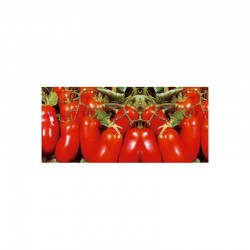 Semi di pomodoro mezzo San Marzano Oliver