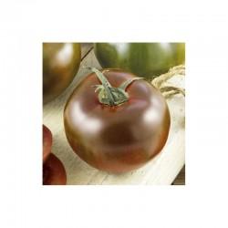 Semi di pomodoro nero kakao