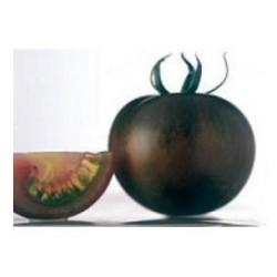 Semi di pomodoro nero zebrino