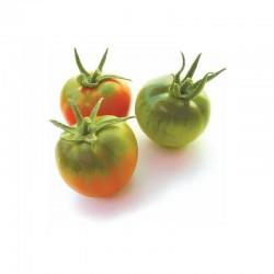Semi di pomodoro tipo pachino reginella