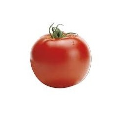 Semi di pomodoro tondo optima