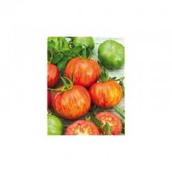 Semi di pomodoro tondo striato tirouge