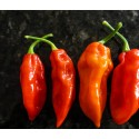 Semi Fatalii Red