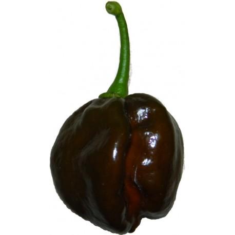 Peperoncini Habanero chocolate - Black Congo secchi 15 gr