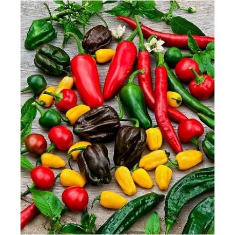 Mix semi peperoncini piccanti MEDIUM 70 semi