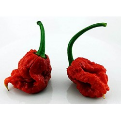Carolina Reaper HP22B fresco