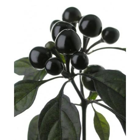 Peperoncini Black Pearl secchi 15 gr