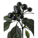 Black Pearl secco
